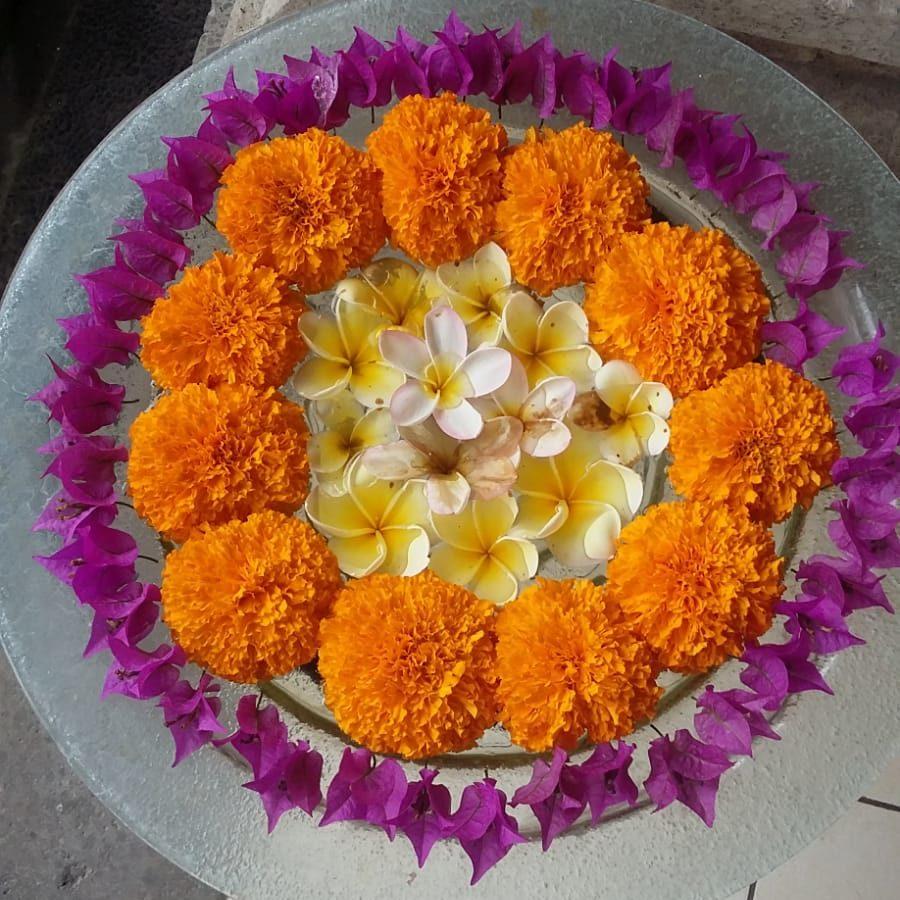 photo pot de fleur